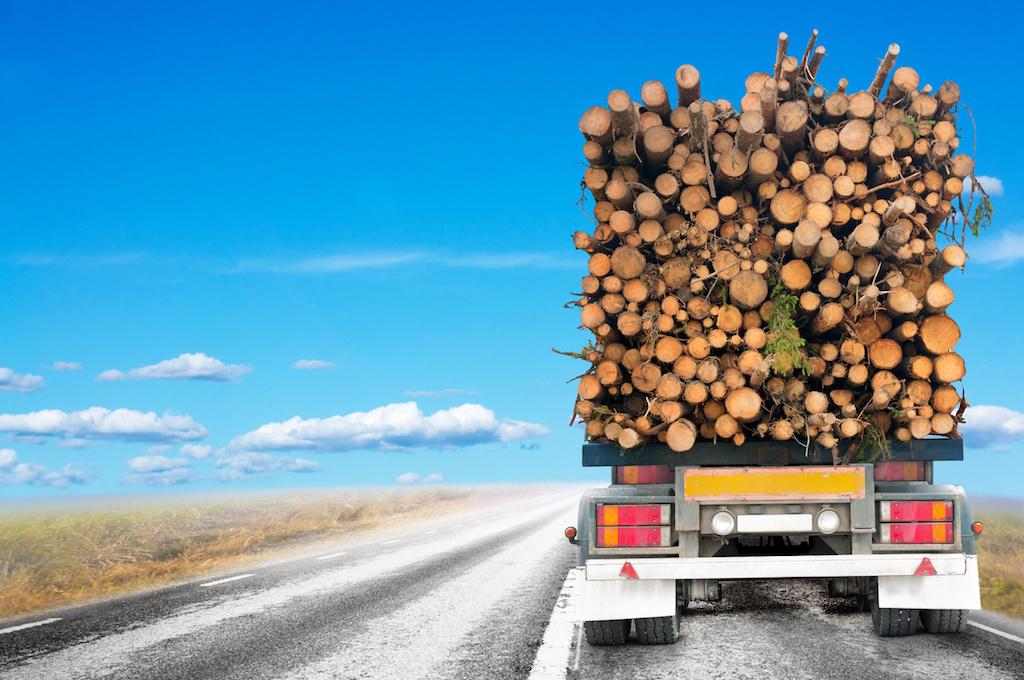 Miškų transportavimas